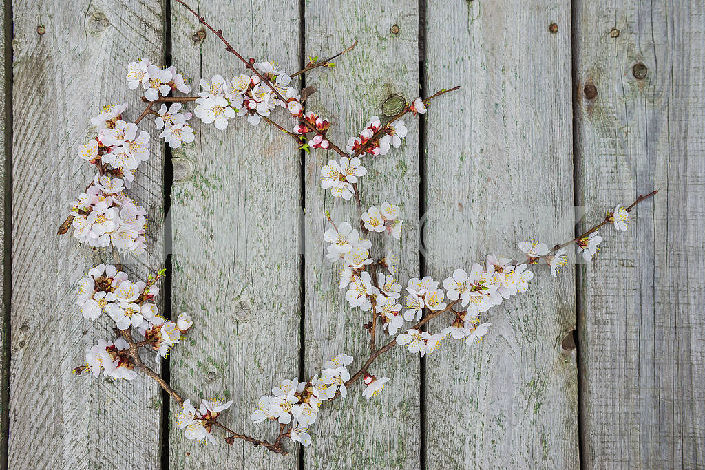 The spring blooming apple tree twig on the boards (planking), flat lay, with lime little leafs. — Image 38116