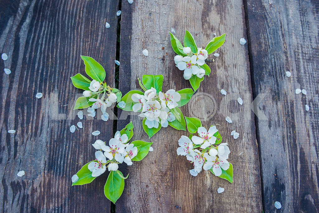 Spring blooming apple tree twig on the boards (planking), flat lay, with lime leafs. flower petals — Image 38119