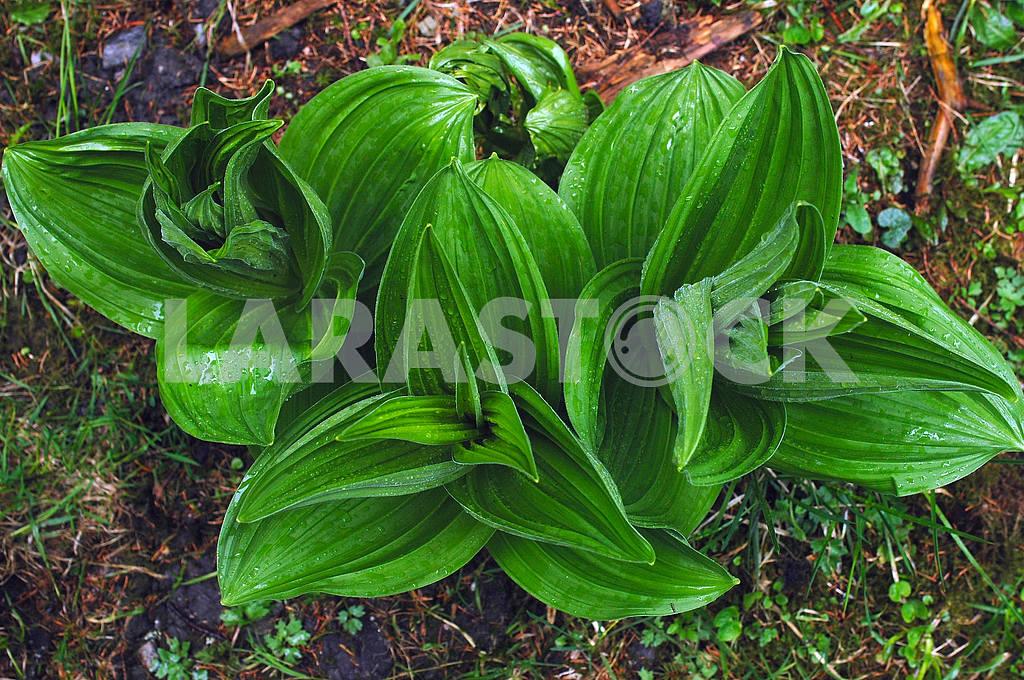 Rain drops on green leaves — Image 3812