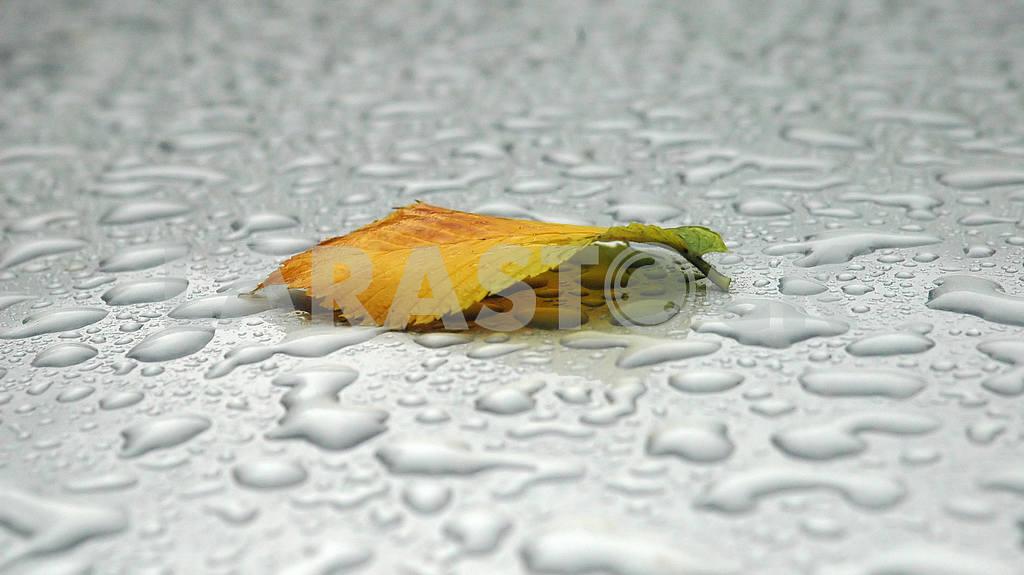 The autumn sheet lies — Image 3818