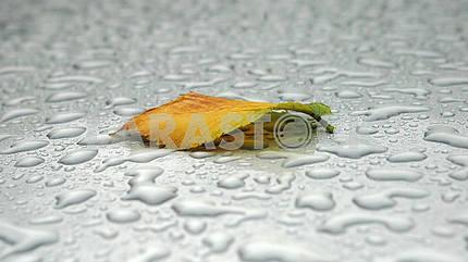 The autumn sheet lies