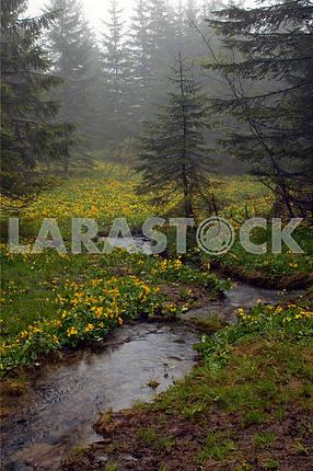 Mountain stream among
