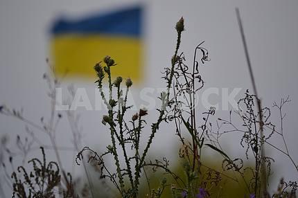Flag of Ukraine in the ATU zone