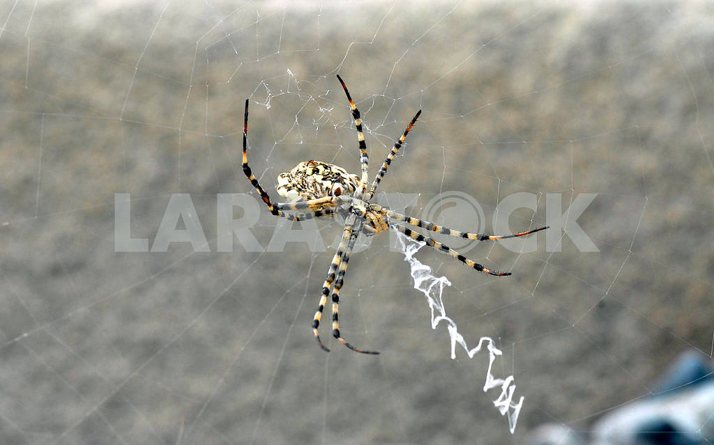 The spider — Image 3839