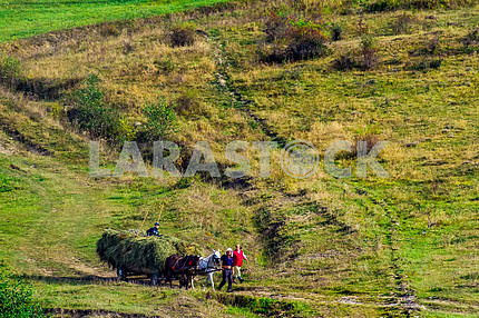 Gathering hay in the Carpathian mountains