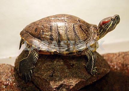 Tortoise on the rocks