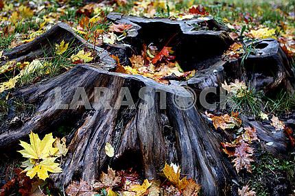Stump with foliage