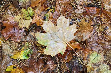 The symbol of autumn