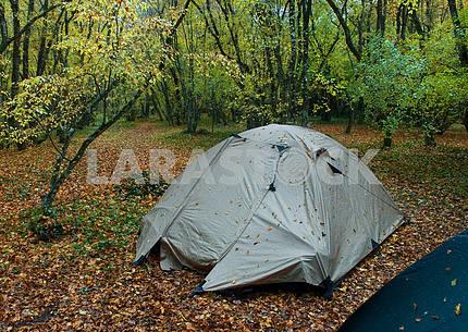 Wet tent in wood in the rain