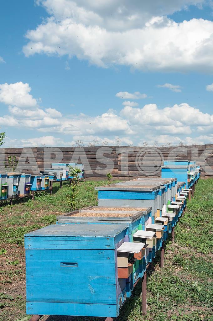Bee-garden — Image 4204