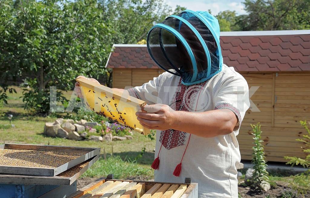 Bee-garden — Image 4213