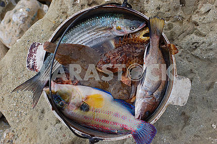 Fish in kettle