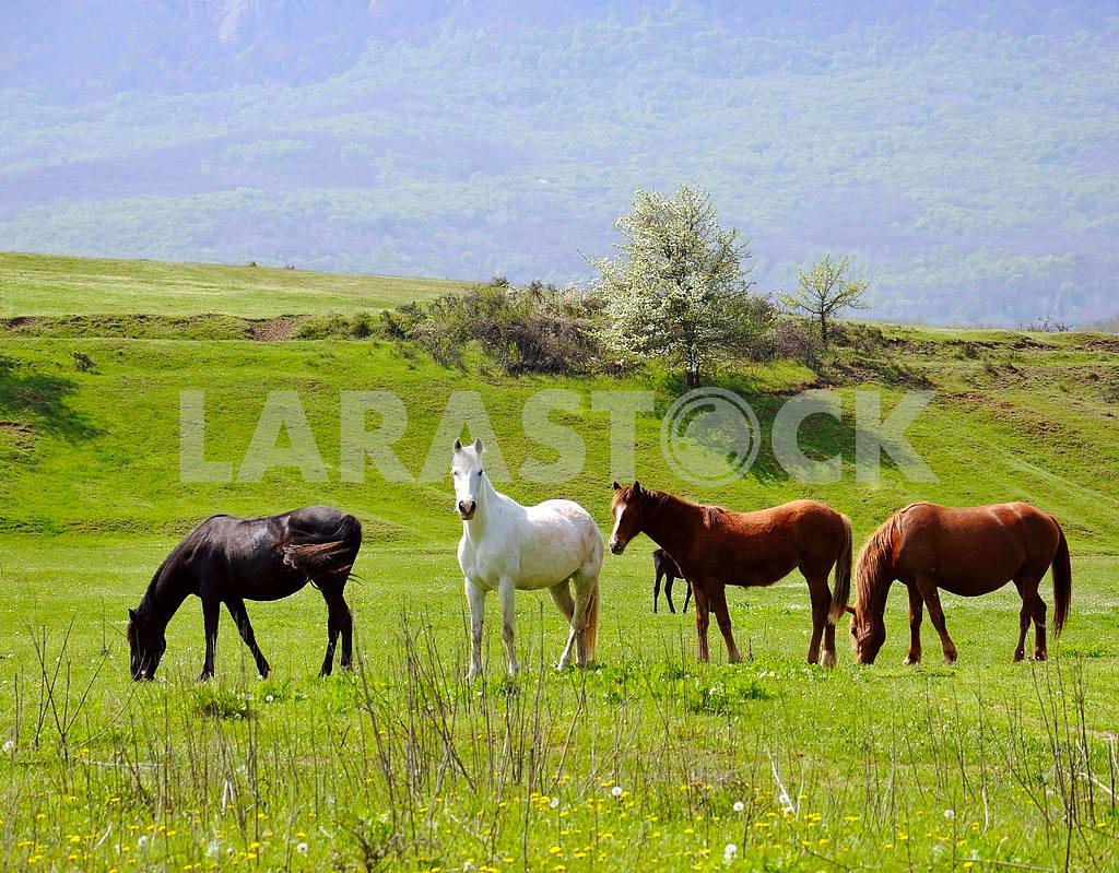 Herd of horses — Image 4233