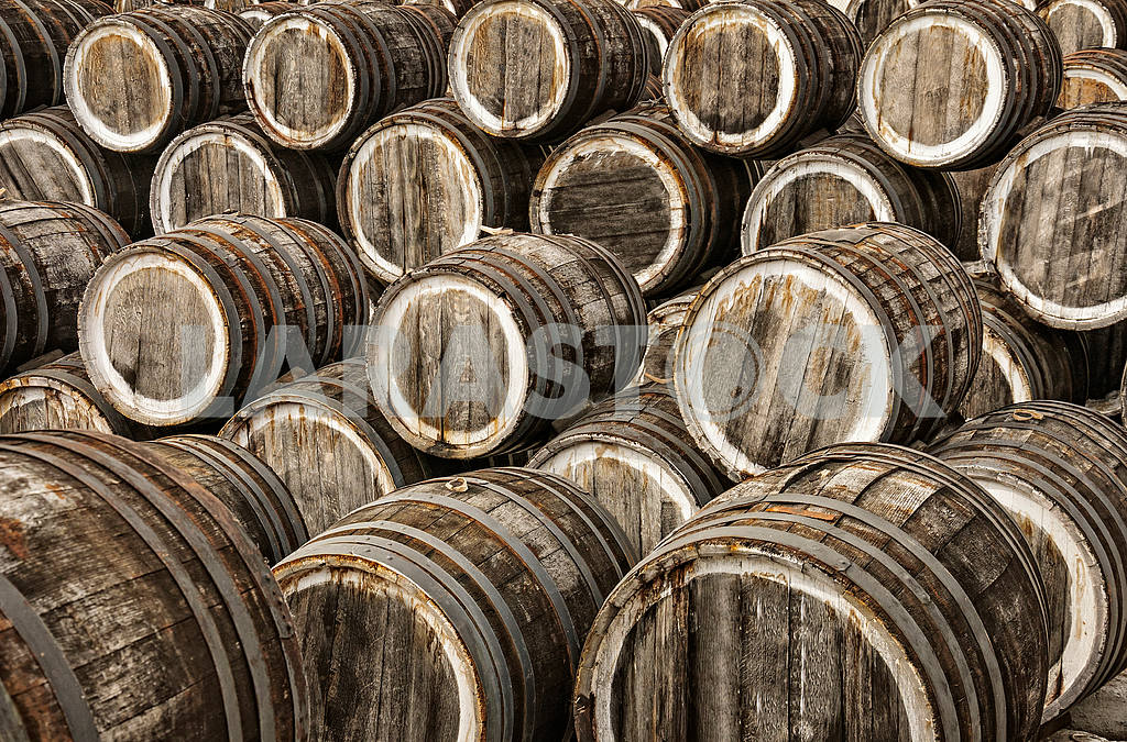 Oak wine barrels in several rows — Image 4240