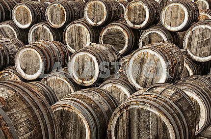 Oak wine barrels in several rows