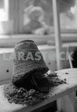 Flower pot in kindergarten in Pripyat