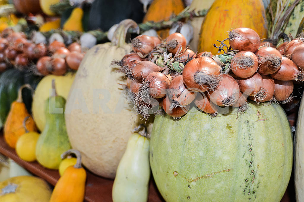 Pumpkins of different varieties in a row with a bow on the marke — Image 45004