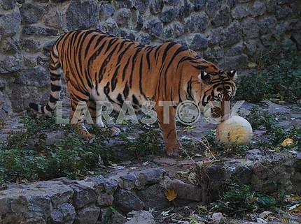Halloween at the Kiev Zoo