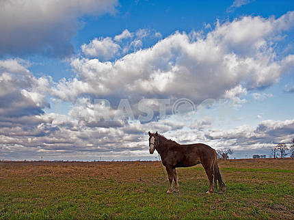 Horse on the autumn field