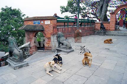 Park Swayambhunath Stupa, Nepal, Kathmandu