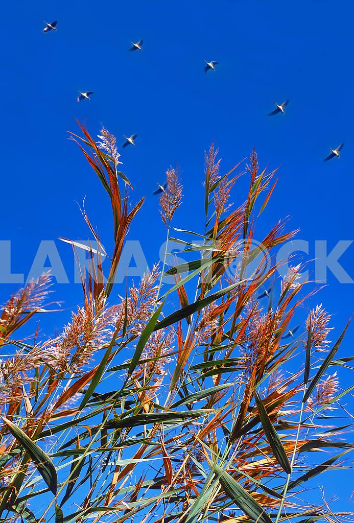Гуси на фоне неба — Изображение 46818