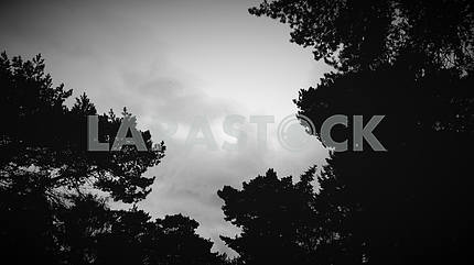 Silhouetted Treetops