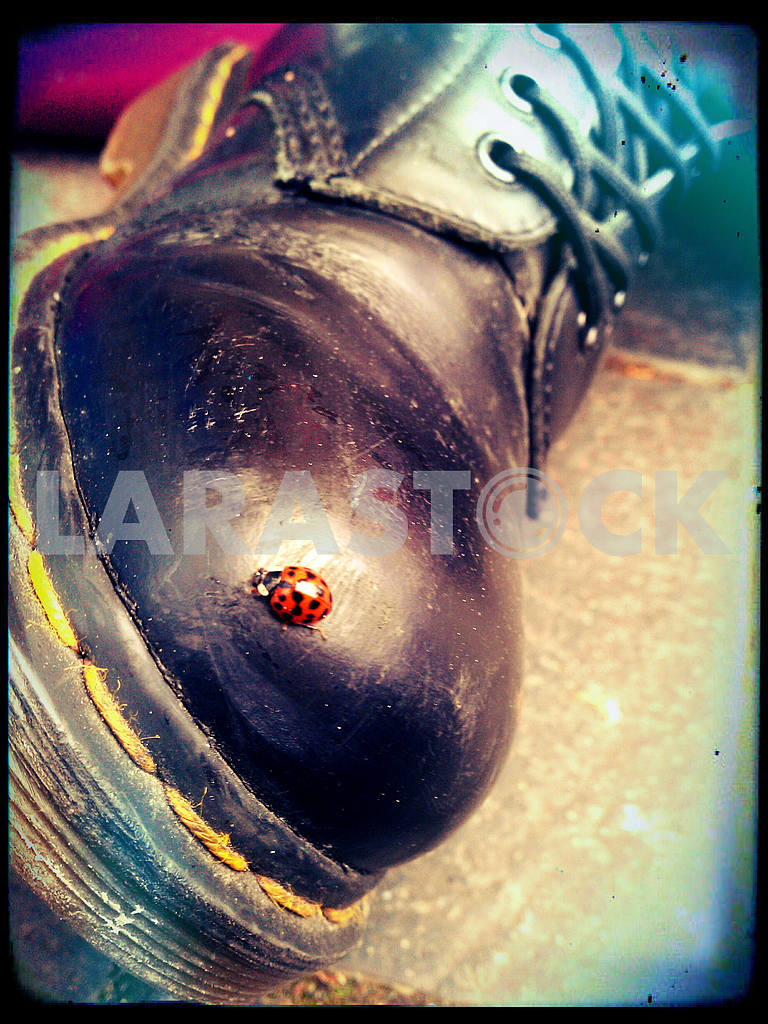 Ladybird on a Boot — Image 47003