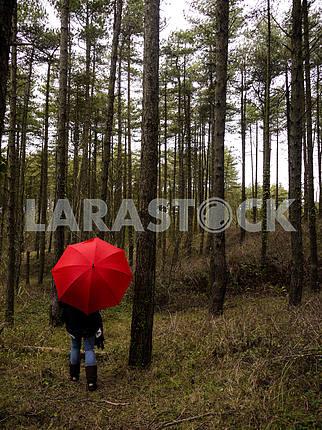 Красный зонтик в лесу