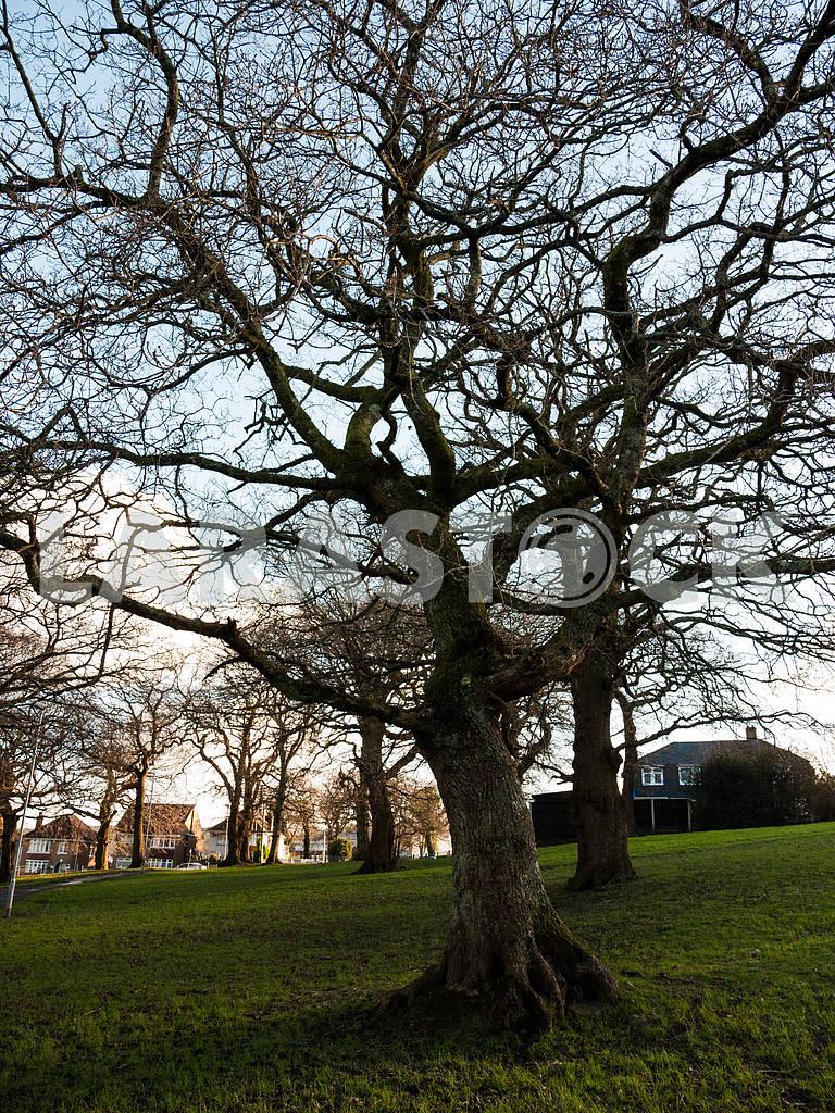Leafless Tree — Image 47051