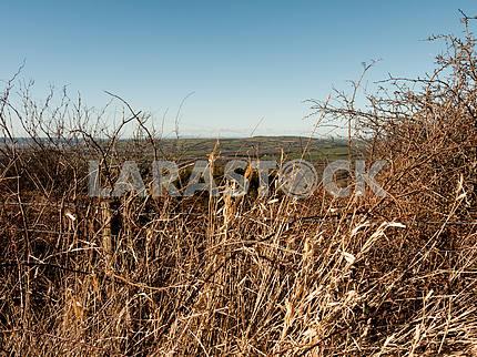 Dead Grass Closeup