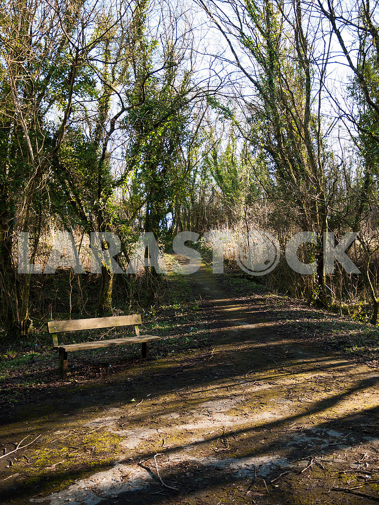 Wooden Bench on a Rural Path — Image 47070
