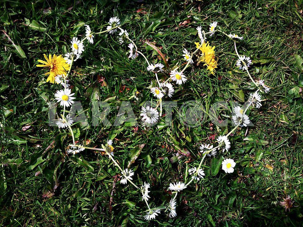 Heart Shaped Daisy Chain — Image 47100