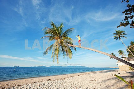 young man on coconut palm