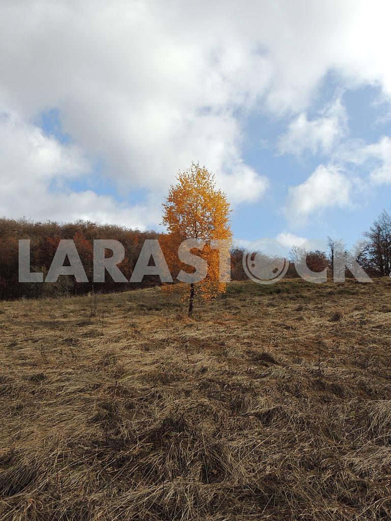 Autumn in the Carpathians — Image 47816
