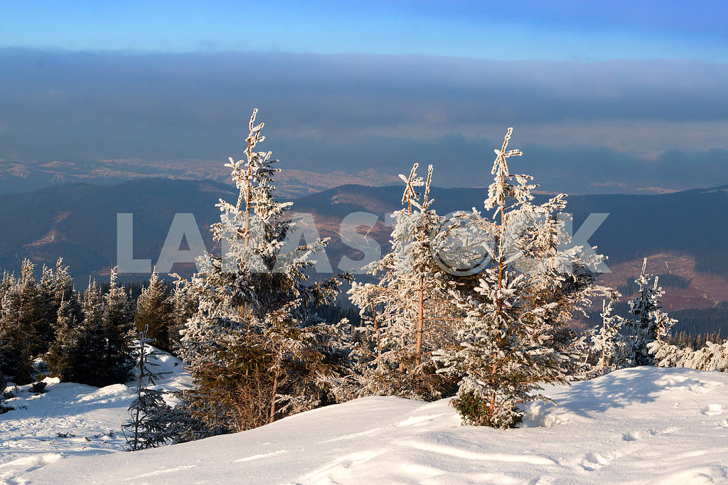 Fir trees covered with snow on background mountains and blue sky — Image 47913