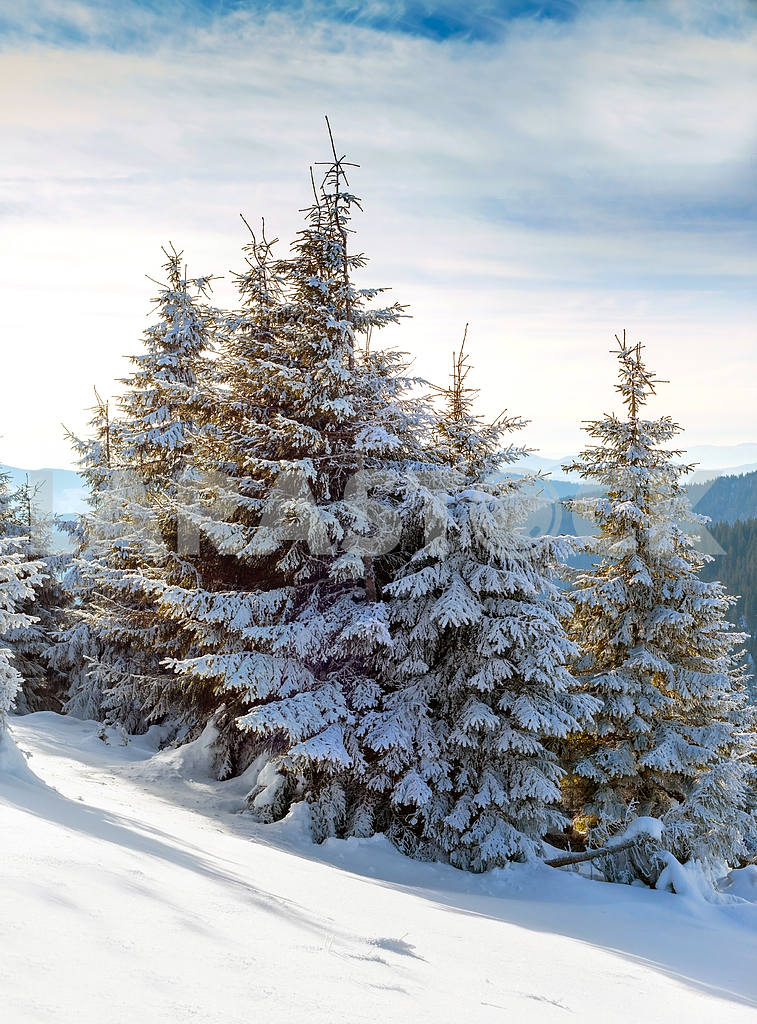 Christmas fir with snow background of mountains. Sunny day, wint — Image 47917