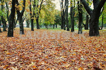 Rainy autumn