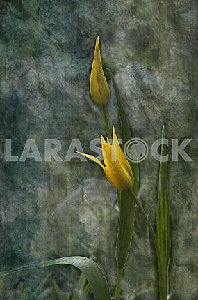 Желтые цветок и бутон тюльпана. Обработка в стиле живопись.