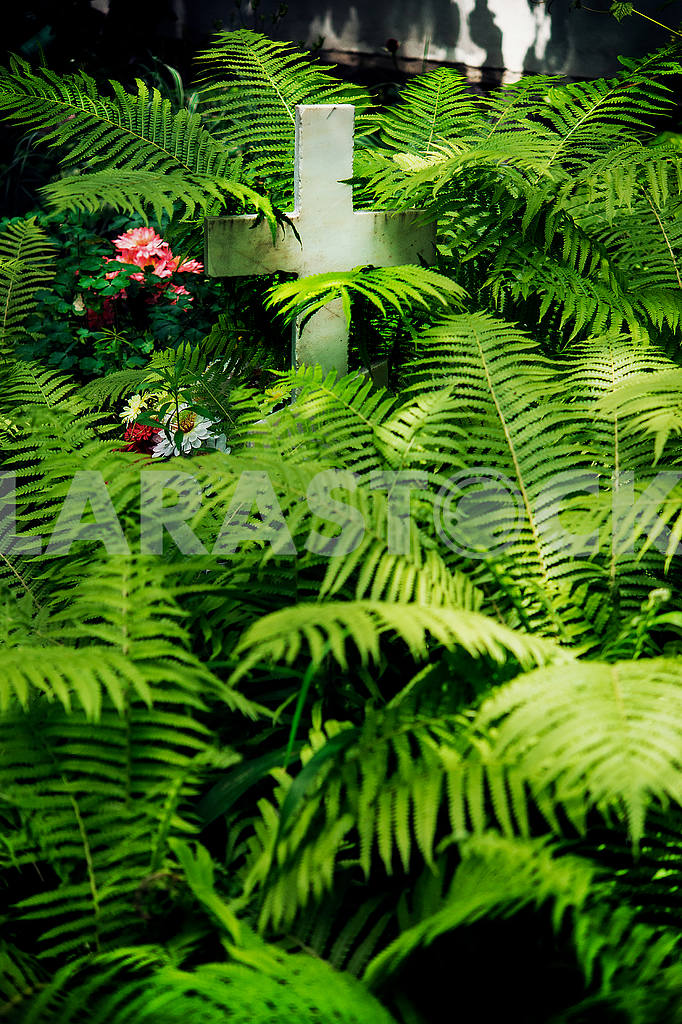 Grave with a cross overgrown with ferns — Image 48636