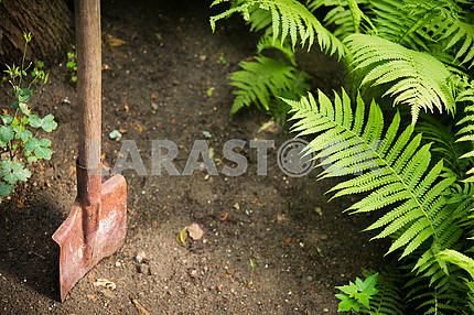 An old shovel in the ground in the garden
