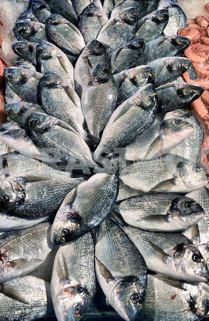 Steaks fresh tuna on display fish market — Image 49183