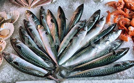 Стейки свежий тунец на дисплее рыбный рынок