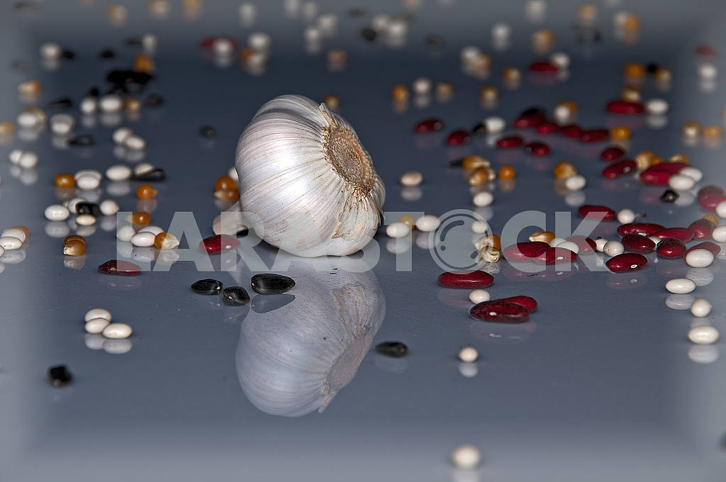 On the blue reflecting surface are scattered head of garlic, corn, beans, seeds. — Image 49440