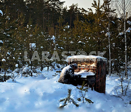 Royal musician covered with snow in the woods.