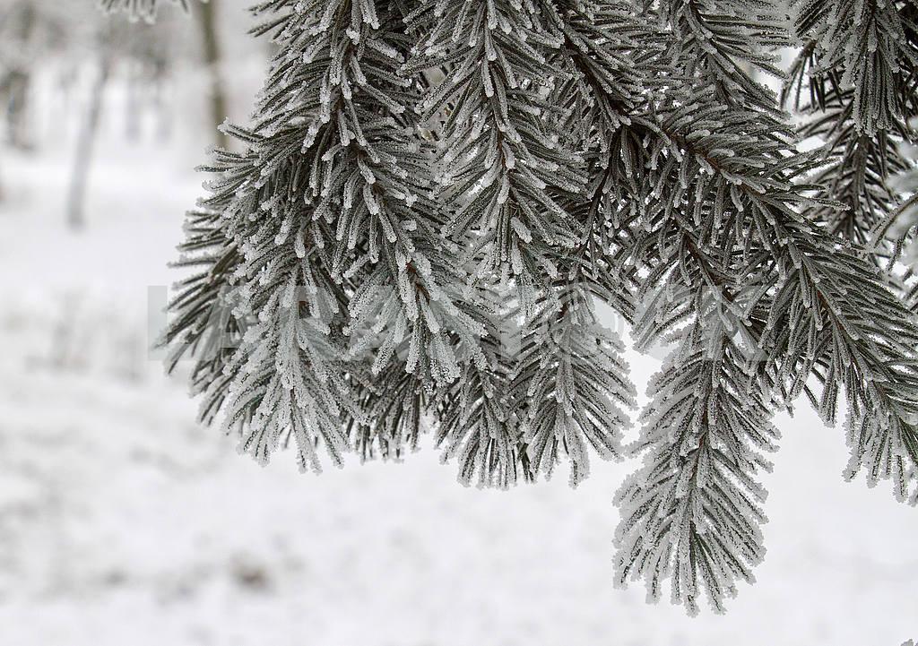 Зимний пейзаж в Мариуполе — Изображение 49726