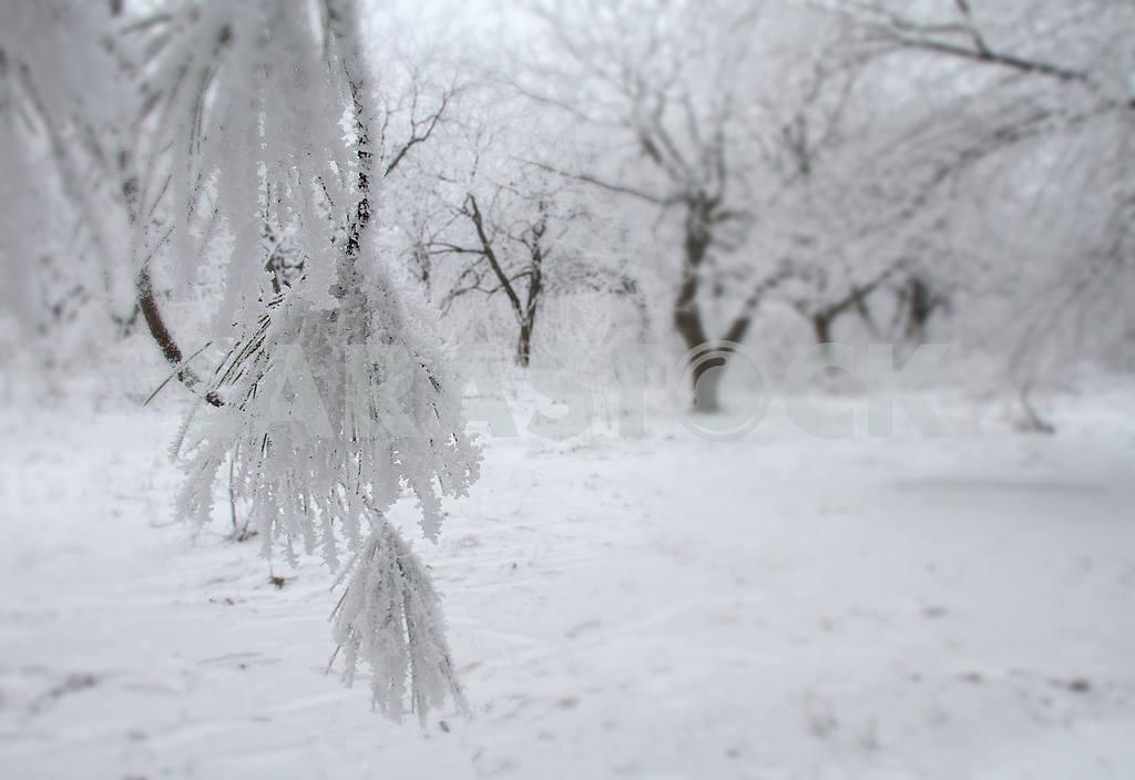 Зимний пейзаж в Мариуполе — Изображение 49729