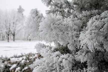 Зимний пейзаж в Мариуполе