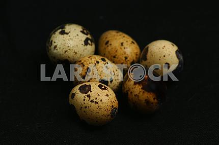 Перепелиное яйца, крупным планом на махровом полотенце