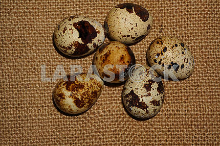 Quail eggs close-up on sacking
