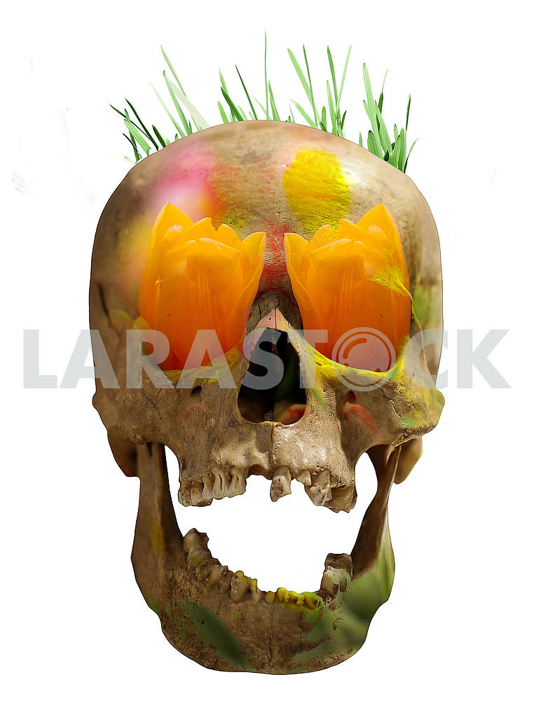 Eco concept - skull and flowers — Image 49990